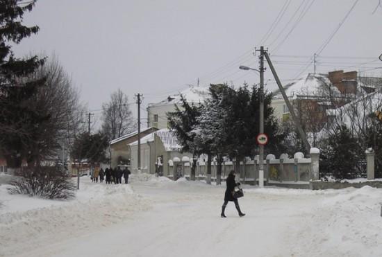 Спиляні ялинки 17 грудня 2012 року.