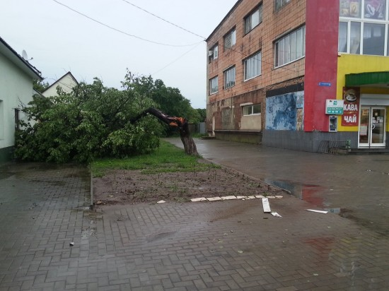 derevo_11