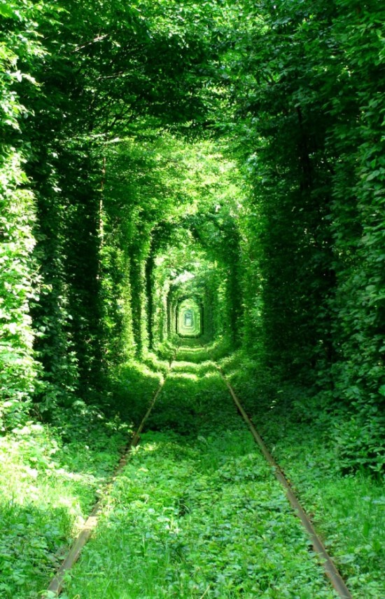 2698005-R3L8T8D-600-tunnel-of-love-green-mile-kleven-rivne-ukraine