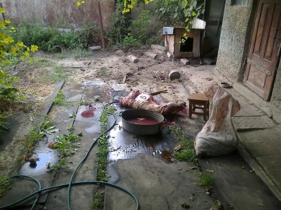 вбита у здолбунові собака (1)
