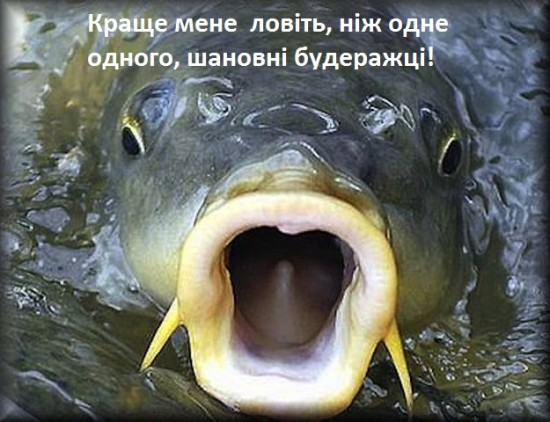 риба в будеражі