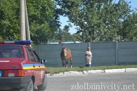 кінь на дорозі (1)