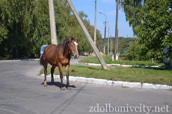 кінь на дорозі (2)