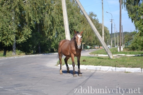 кінь на дорозі (3)