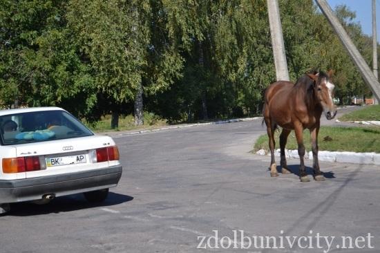 кінь на дорозі (4)