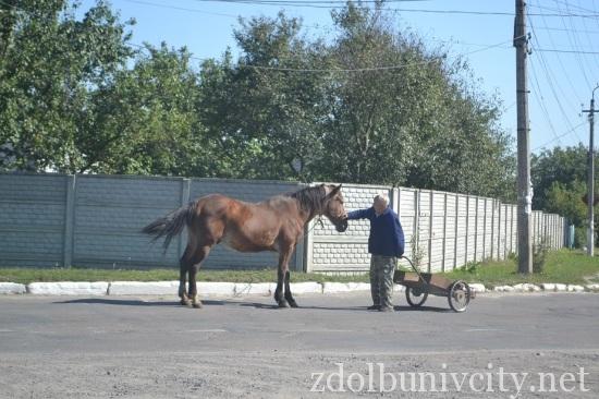 кінь на дорозі (6)