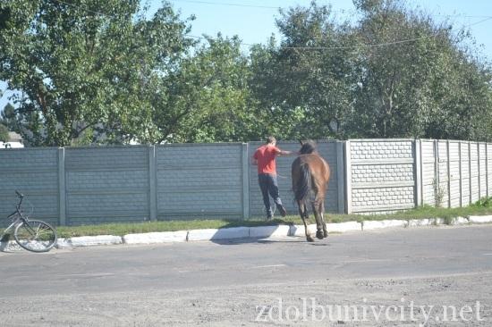 кінь на дорозі (7)