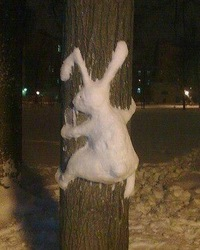 кролік