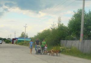 Бродячі собаки заполонили Квасилів