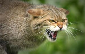 сказ кіт